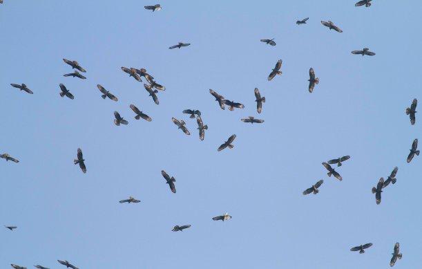 Birdwatching in Tarifa