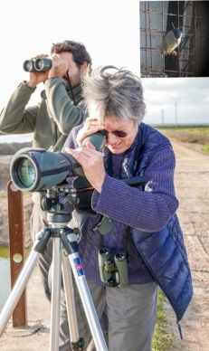 Birdwatching in Doñana